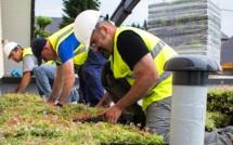 Végétalisation des toits terrasses pour les pros